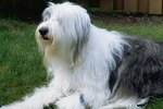The Best Clippers for a Long Haired Dog