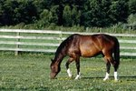 How to Correct Aggressive Equine Behavior