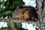 Tree Squirrel vs. Ground Squirrel