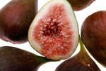 What Is the Symbiotic Relationship between Fig Wasps & Figs?
