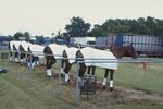 Why Use Polo Wraps for Horses?