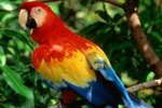 The Eating Habits of Scarlet Macaw Parrots