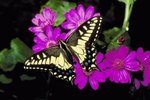 The Meanings of Butterfly Colors