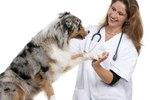 Side Effects of Clavamox in Dogs