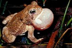 How Does a Toad Protect Itself?