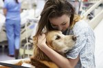 How to Adopt a Therapy Dog