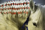 Different Ways to Do Your Horse's Mane & Tail