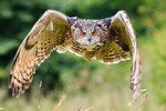 How to Keep Large Predatory Birds & Owls Away From Chickens
