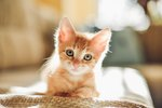Smitten by Kittens? Learn the Care Basics