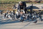 What Not to Feed Pigeons