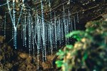 How Do Glow Worms Produce Light?