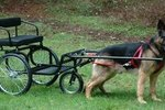 How to Teach a Dog to Pull a Cart