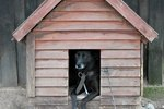How to Make a Dog House from One Sheet of Wood