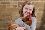 Do Chickens Make Good Pets?