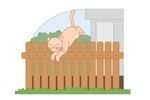Cat Proofing Your Fence