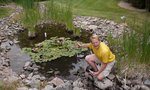 How to Grow Yellow Pond Lilies