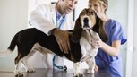 Facts on Veterinarians