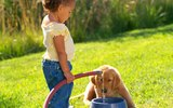 Is Filtered Water Bad for Puppies?