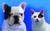 Vitamin Supplements for Pets