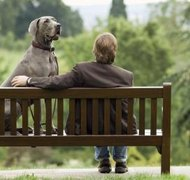 Pets fall into a gray area of divorce law.
