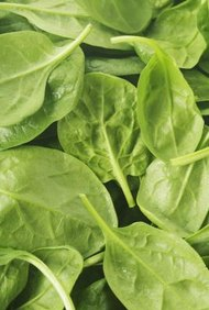 Raw Spinach Nutrition Information