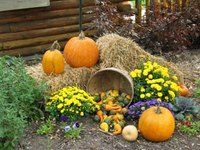 Decorate a Yard for a Fall Festival