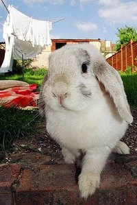 Flea Treatment for Rabbits