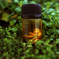Many herbs and oils are effective against dandruff