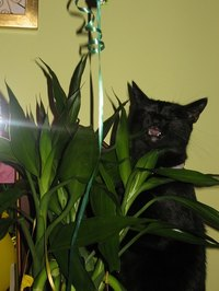 For some cats, house plants are like an all-you-can-eat salad bar
