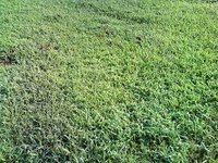 Types of Ground Cover