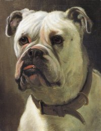 George Earl's English Bull Dog