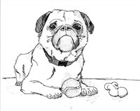 This drawing focuses on the dog's characteristic heavy jowls.