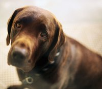 Act Quickly if Your Dog Has the Signs of Bloat