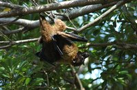 Encourage bats to leave your house and find more comfortable places to roost.