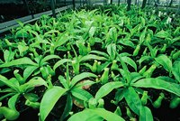 Certification helps prevent plant diseases from spreading worldwide.