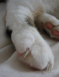Cats' paws are subject to serious infection.