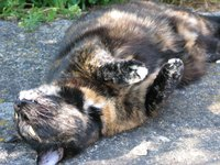 Natural flea baths kill fleas on your cat without the risks of chemical pesticides.