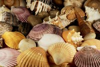 Preserve your shells and display them.