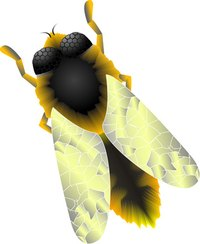 Students can make a construction paper beehive when learning about apiology.