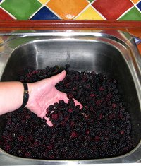 Turn whole blackberries into an accurate measure of crushed for making a jam recipe.
