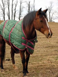 Horse blankets must fit  well to avoid stress and injuries.