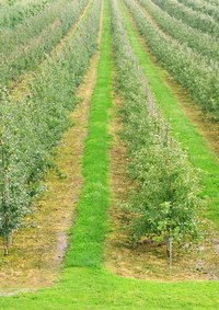 Casoron keeps the ground between crops weed-free.