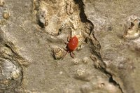 Most household mites are too small to see with the naked eye.