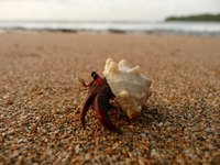 A hermit crab's health and care can be very different from traditional pets.