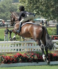 Grids encourage correct jumping technique in both horse and rider.