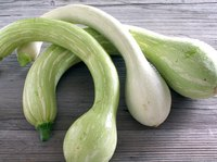 Treat zucchini, crook neck and other summer squash plants with homemade mildew remedies.