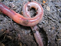 Earthworms add nutrients to the soil.