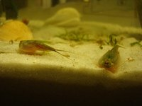 Triops are fun to hatch and watch grow.