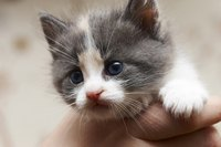 Very young kittens cannot use standard flea medications.