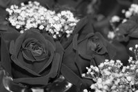 You may have to get creative if you want to find black roses.